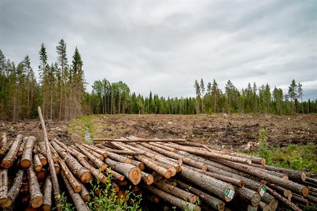 Skogen är vårt klimathopp